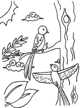 Gallery For Gt Quetzal Guatemala Clipart Quetzal Coloring Page